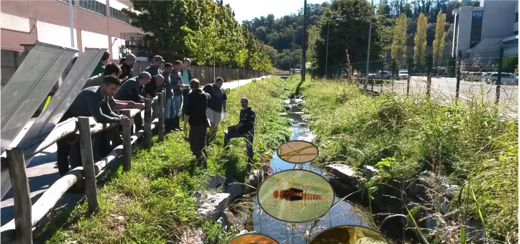 Personen am Ufer eines Flusses, die in das Gewässer blicken. Verschiedene Wasserorganismen sind vergrössert zu sehen.